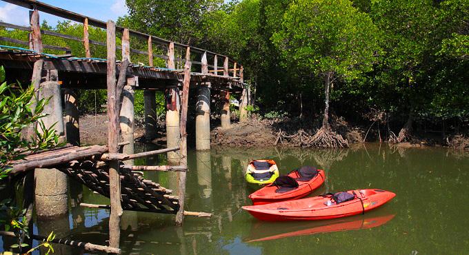 Koh Lanta Urlaub: Mystik im Mangrovenwald