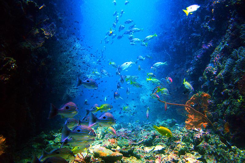 Auf Koh Phi Phi tauchen gehen! Foto: Zeavola Resort