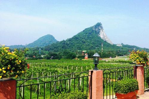 """Thailand Lifestyle Tipp von Nathalie Gütermann: Silverlake Weingut mit Blick auf den """"Buddha Mountain"""" in Pattaya"""