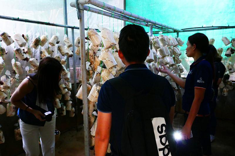 Thailand-Lifestyle.com: Khao Yai Panorama Farm mit Nathalie Gütermann