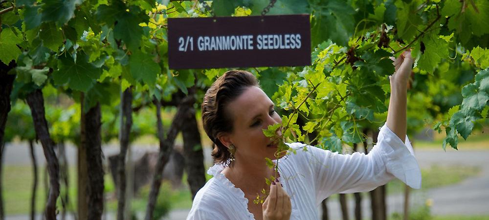 "Khao Yai Wein Tour: ""GranMonte Winery"""