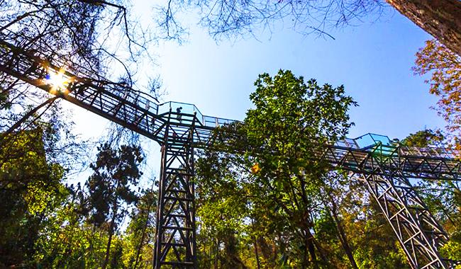 """Thailand Lifestyle präsentiert: Queen Sirikit Botanic Garden. Hier: der """"Canopy Walk"""""""